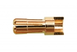 Goldkontakt 5,5 mm, Stecker